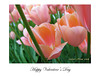 1G - Greeting Cards : Contact team@color-flow.com for pricing and options.